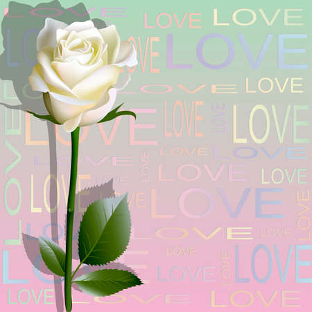 formal garden: Colored background from letters love and a flower of white rose