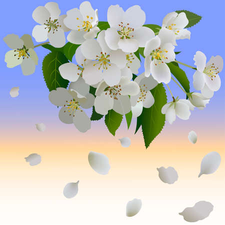 petal: White apple flowers with leaves and bud. Branch of blossoming apple tree and petal Illustration