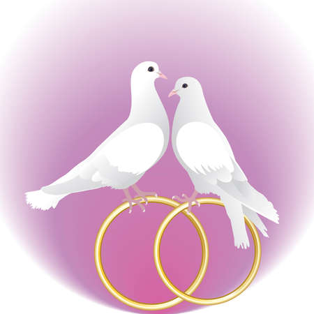 white backgrounds: Two white pigeons and gold wedding rings