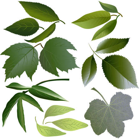 Set of leaves of such flowers as rose, mallow, paeonia, viburnum, apple, petunia, cherries