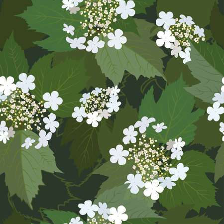 guelder rose: Seamless background from bunch of blossoming viburnum flower Illustration