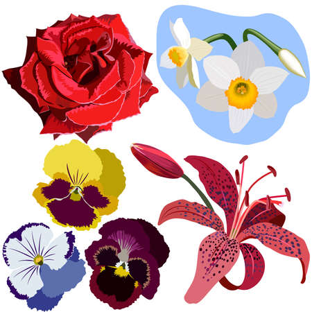 tiger lily: Set of flowers, red rose, narcissus, three pansies, and pink lily. The flowers have no gradients or meshes