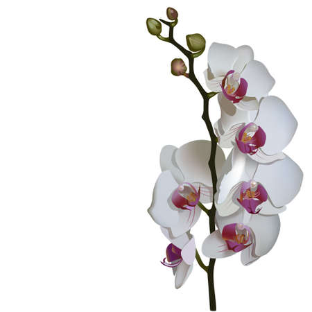Photorealistic illustration of phalaenopsis, a branch of white flowers with pink center