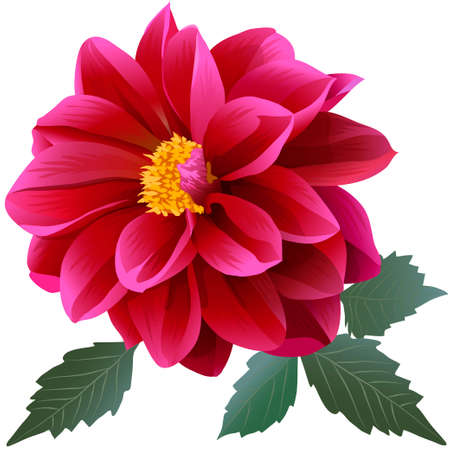 Photorealistic red dahlia flower with four leaves. Close-up.