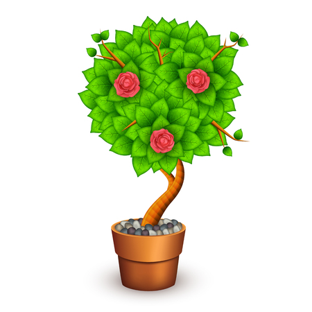 Isolated tree with flowers in clay pot.