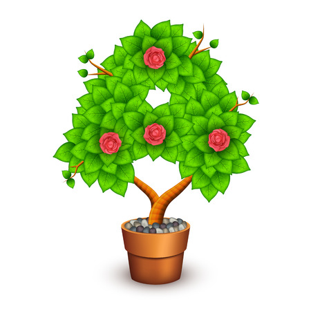 houseplant: Isolated tree with flowers in clay pot.