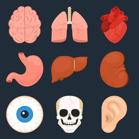 인간 장기의 플랫 아이콘을 설정합니다.