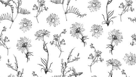 herbal background: Seamless pattern with hand drawn plants. Vector. Herbal background. Botanical illustration