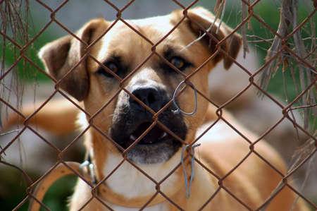grating: Dog, snout, muzzle, colour, grating