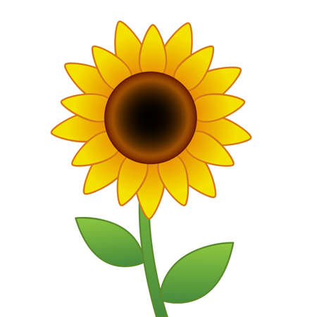 Cartoon vector sunflower isolated on white background