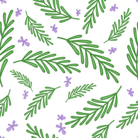 Rosemary doodle background. Seamless vector pattern Illustration