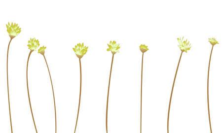 flower vector over white Stock Vector - 16907823