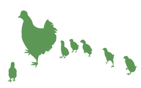 chicken and its chicks  Vector