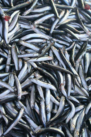 Fresh fish on ice on the market Фото со стока - 18963944