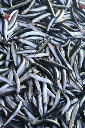 atrapar: Pescados frescos en el hielo en el mercado