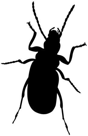 louse: an insect silhouette