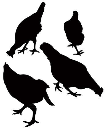chickens silhouette vector