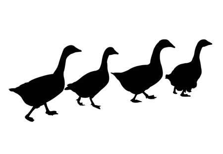 Ducks  silhouette vector illustration on white background.