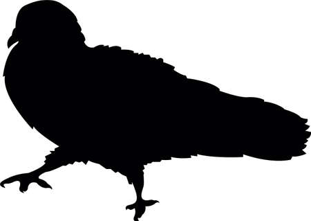 a pigeon body silhouette vector