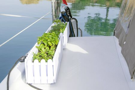 Pot garden with seedlings of cucumbers, tomatoes and salad growing while travelling on board of sailing yacht , maybe ocean cross or world tour, as well as living on boat as lifestile