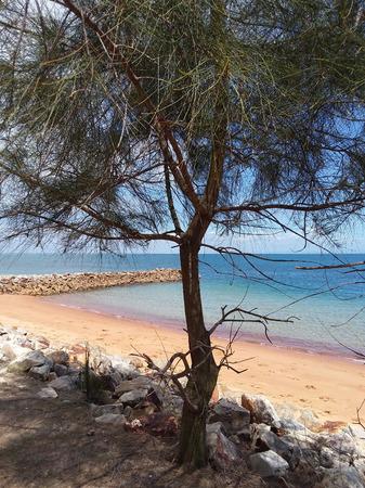 Tree on North Stradbroke Island off the east coast of Australia. Iron deposits create the orange hue on the sand and the rocks. Stock Photo