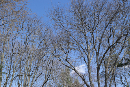 Bare tree branches against a blue sky in spring Stock Photo