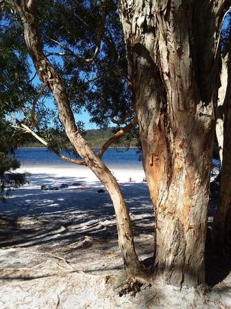 Beach on Coral Sea with trees on North Stradbroke Island off the east coast of Australia