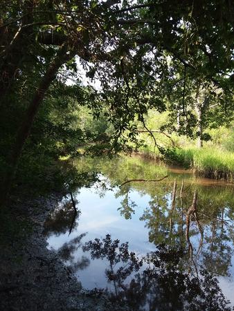 Tidal creek in South Carolina Stock Photo