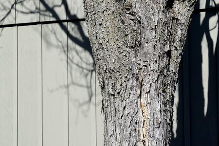Tree bark with shadow on wooden slats Stock Photo