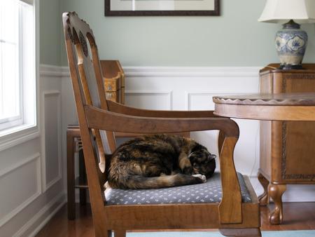 Cat sleeping on dining room chair
