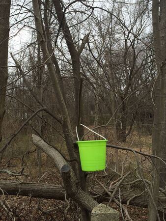 Green bucket hanging from tree