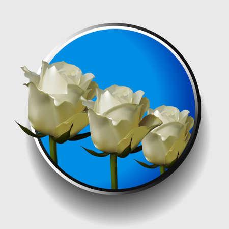 trio: 3D Illustration of a Trio of White Ivory Roses Over Blue Metallic Border on White Background Illustration