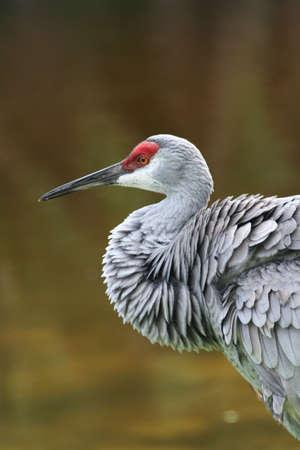 gray herons: Heron