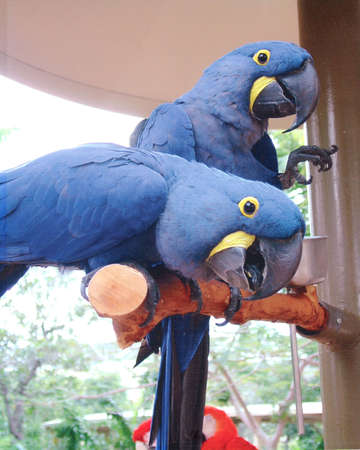 Macaws Banco de Imagens