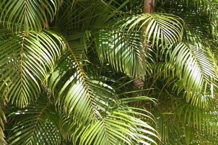 reflecting: Palm leaves