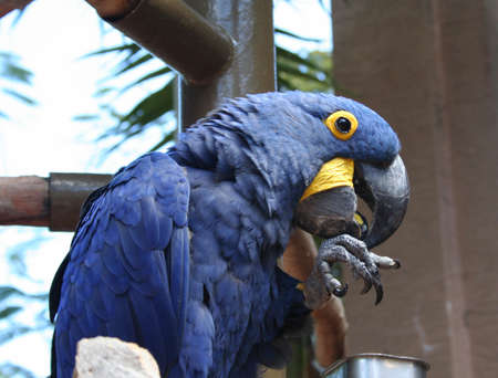 Macaw, hyacinth, parrot