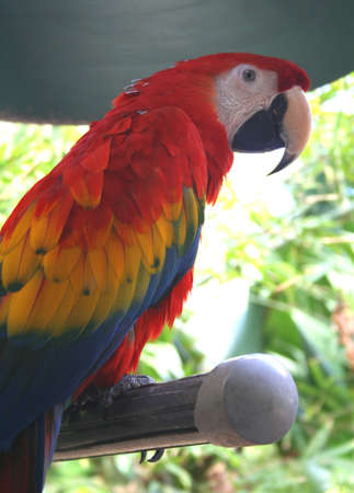 Macaw, parrot