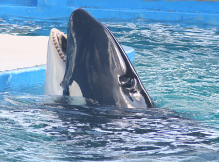 key biscayne: Whale Stock Photo