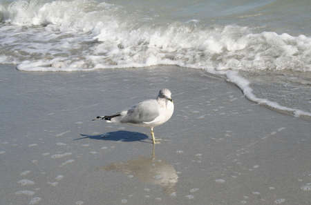 key biscayne: Seagull Stock Photo