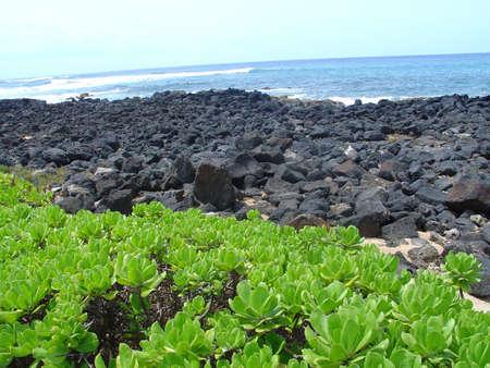 Lava Rocks, Hawaii Zdjęcie Seryjne