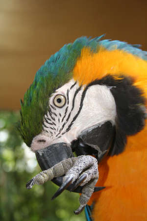Macaw, Miami, Florida photo