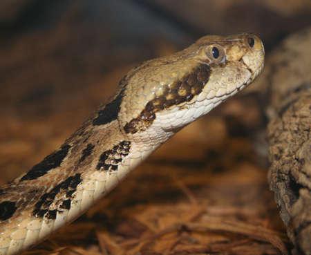 key biscayne: Snake, at wildlife center, Key Biscayne, Florida Stock Photo