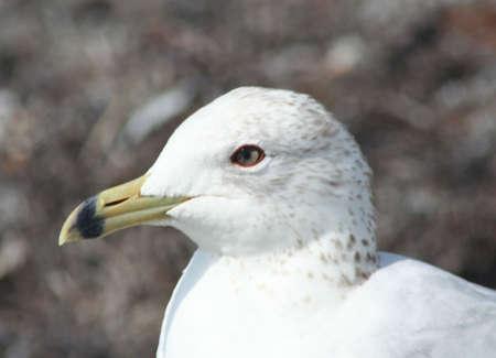 key biscayne: Seagull at Key Biscayne beach