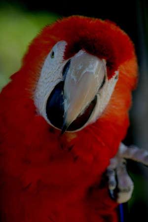 Parrot, Macaw, Florida