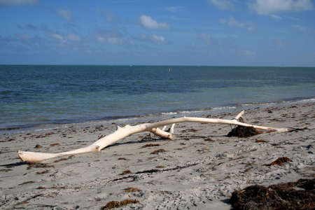 key biscayne: driftwood, Key Biscayne, Florida