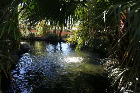 lagoon, trees, plants
