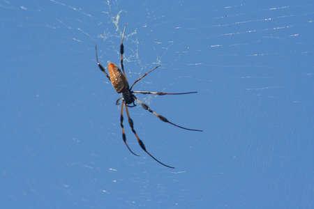 spider, making web
