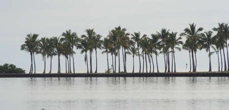 palm trees, Islamorada, Florida