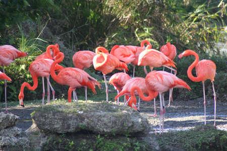 flamingos: flamingos, Miami Metro Zoo