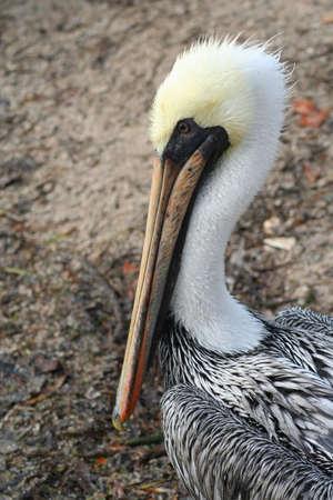 bird sanctuary: pelican, bird sanctuary